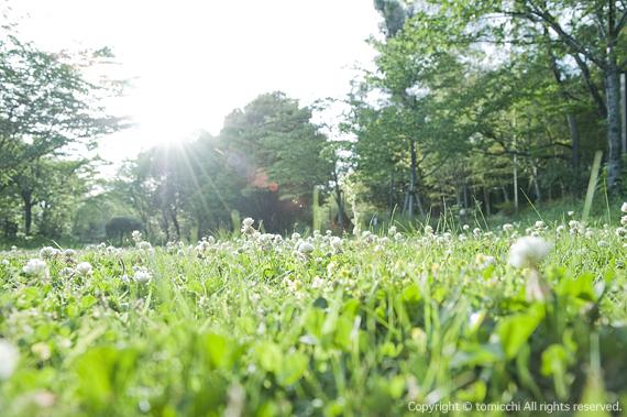 shirotumekusa.jpg
